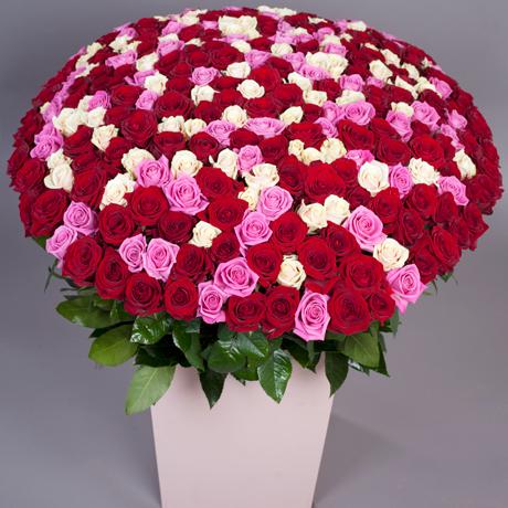301 роза  разных цветов