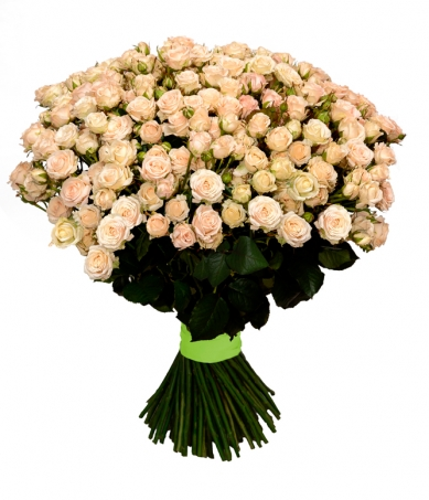 51 ветка кустовой розы сорт Яна