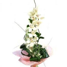 Букет белых орхидей Красота
