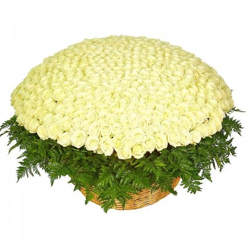 корзина из 501 белой розы