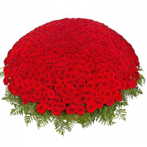 Корзина из 501 красной розы