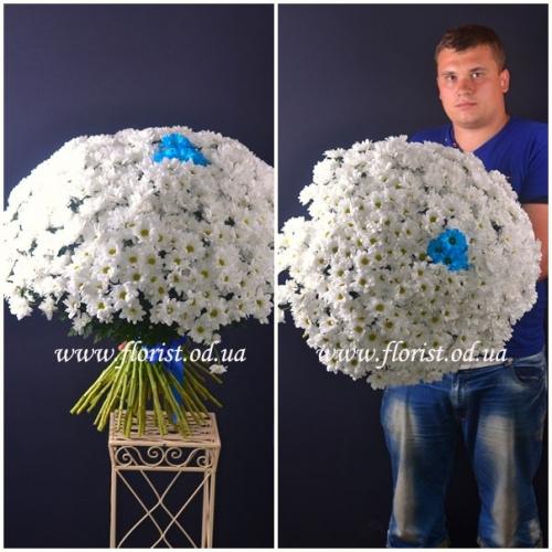 Букет хризантем из 61 ветки Вальс цветов