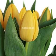 Желтый тюльпан (поштучно)